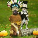 dogs and cats who dread Thanksgiving