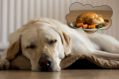 Thanksgiving hazards for pets