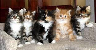 choose the best kitten
