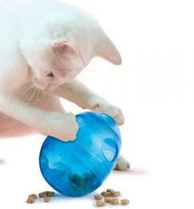 kitten playing with cat food toy